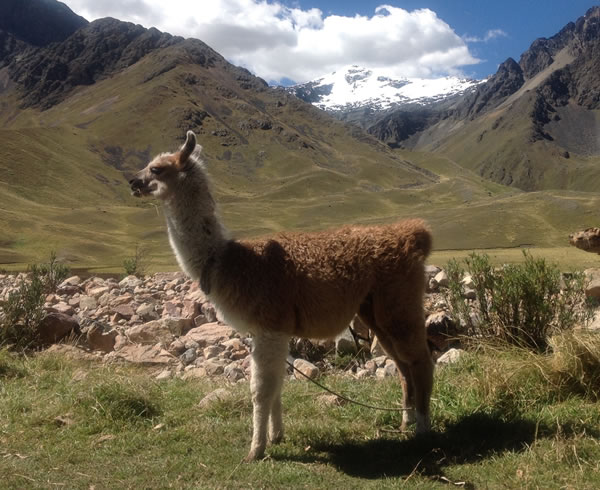 Soul of the Andes 11 days